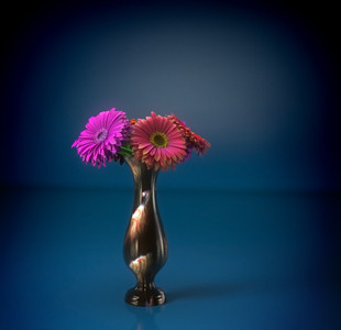 Flowers: gerberas final render